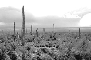 https://commons.wikimedia.org/wiki/File:Arizona_Saguaro_Cactus.jpg